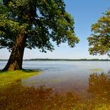 Inundação da mola Fotografia de Stock