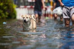 Inundação de Nonthaburi no estilo de vida de Tailândia 2011-The dos povos no mas Imagens de Stock Royalty Free