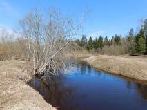 Inundação do rio Foto de Stock Royalty Free