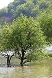 Inundação do rio no Spring Valley do rio de Cerna Fotos de Stock