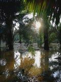 Inundação na vila fotos de stock
