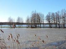 Inundação no campo fotografia de stock royalty free