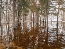 Inundação no parque imagem de stock royalty free
