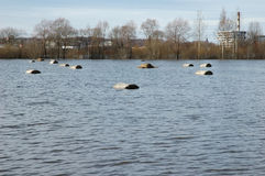Inundação no rio na primavera Imagens de Stock Royalty Free