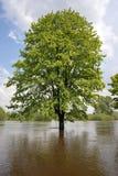 Inundação no rio Warta 2010 Fotografia de Stock Royalty Free