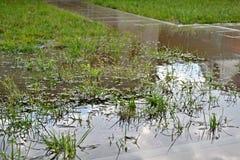 Inundação pequena no jardim fotografia de stock