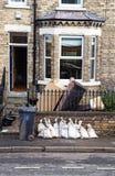 Inundações: As consequências Imagem de Stock Royalty Free