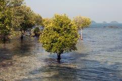 Inundações da mola Imagem de Stock