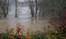 Inundações do rio de Skokomish da chuva pesada Fotos de Stock