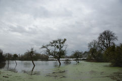 Inundações em Burrowbridge Somerset Levels Reino Unido 2014 Fotos de Stock