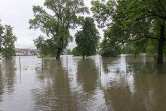 Inundações Praga junho de 2013 Imagem de Stock Royalty Free