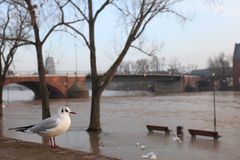 Inundación de Frankfurt-am-Main Imagen de archivo libre de regalías