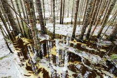 Inundación de la primavera Imagenes de archivo