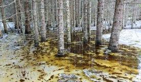Inundación de la primavera Fotos de archivo
