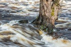 Inundación de la primavera Imagen de archivo libre de regalías