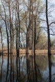 Inundación de la primavera Fotografía de archivo