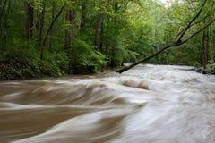 Inundación del parque de Hibernia Fotos de archivo libres de regalías