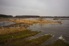 Inundación del río de la primavera sobre un campo con la hierba seca del ` s del año pasado Fotografía de archivo