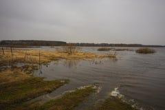Inundación del río de la primavera sobre un campo con la hierba seca del ` s del año pasado Fotos de archivo