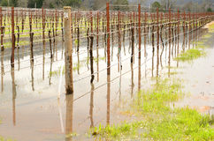 Inundación del vino Foto de archivo