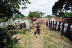 Inundación en Tailandia fotos de archivo