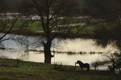 Inundaciones Buckinghamshire Inglaterra Reino Unido de Reino Unido 2014 Imagen de archivo libre de regalías