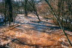 Inundaciones después de derretir de la nieve en el bosque Fotografía de archivo libre de regalías
