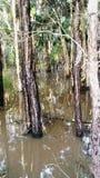 Inundado para fora Imagem de Stock