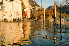 The inundation of lake Lugano. Lugano, Switzerland - 30 november 2002: people looking to ducks swimming on the flooded streets of Lugano on Switzerland Royalty Free Stock Images