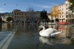 The inundation of lake Lugano Stock Photography