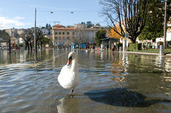 The inundation of lake Lugano Stock Photos