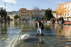 The inundation of lake Lugano. Lugano, Switzerland - 30 november 2002: people looking to swan swimming on the flooded streets of Lugano on Switzerland Stock Images