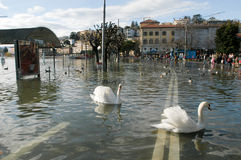 The inundation of lake Lugano. Lugano, Switzerland - 30 november 2002: people looking to swans and ducks swimming on the flooded streets of Lugano on Switzerland Stock Photo