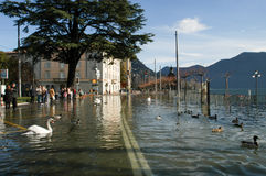 The inundation of lake Lugano. Lugano, Switzerland - 30 november 2002: people looking to swans and ducks swimming on the flooded streets of Lugano on Switzerland Stock Photography