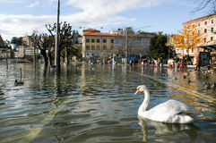 The inundation of lake Lugano. Lugano, Switzerland - 30 november 2002: people looking to swans and ducks swimming on the flooded streets of Lugano on Switzerland Stock Photos