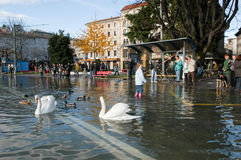 The inundation of lake Lugano. Lugano, Switzerland - 30 november 2002: people looking to swans and ducks swimming on the flooded streets of Lugano on Switzerland Royalty Free Stock Image