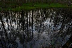 Inunde a floresta da mola refletida na água cedo na manhã do rio Fotografia de Stock