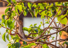 Invånare av kameleontkamouflage som fortlever i natur Royaltyfri Foto