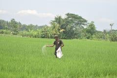 Invånare subventionerade gödningsmedelbruk från BULOG Arkivbilder