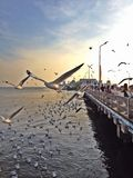 Invandring av Seagulls Royaltyfri Foto