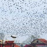 Invasão dos pássaros imagem de stock