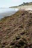 Invasion of algae Stock Photo