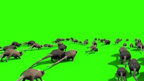 Invasion of Rats Mice Sniff Mouse Back Green Screen 3D Rendering Animation