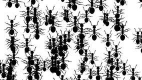 Invasion von Ameisen stock abbildung