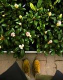 Invasion von Blumen Stockfoto