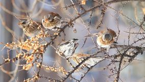 Invasion of wild birds in gardens in winter. Changing the season, wild birds survive in the cold stock video