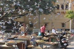 Invasione dell'uccello in un mercato a Jaipur Fotografia Stock