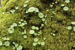 Invasione verde Fotografia Stock