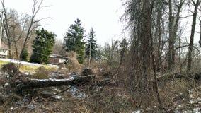 Invasive vines in winter Stock Images
