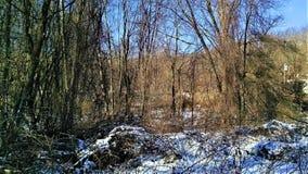 Invasive vines in winter Stock Photography